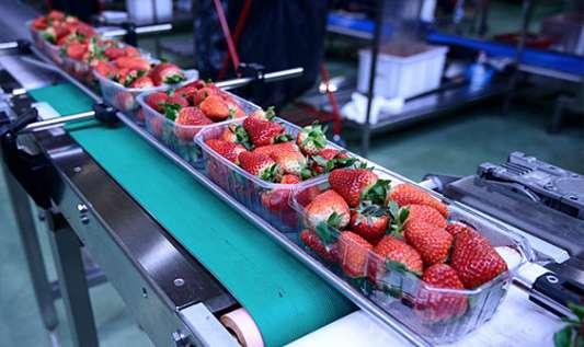 Novità in arrivo per il 2019: Nuova Linea di Lubrificanti Food Grade Speciali.
